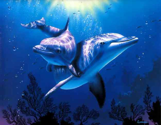 reiki golfinhos